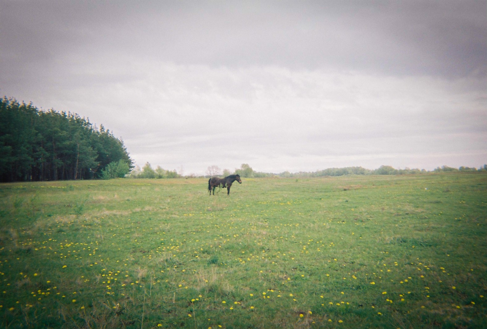 A horse stands in a field near Chernobyl